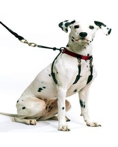 The Sporn Stop Pull Halter for Dogs