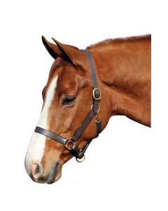 HDR Advantage Leather Halter